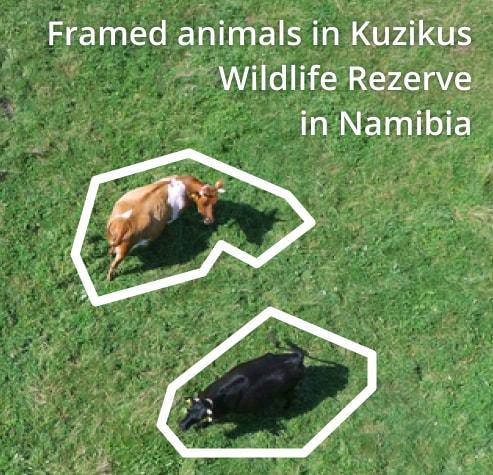 Framed animals in Kuzikus